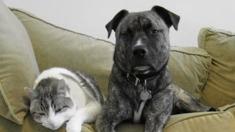 개와 고양이, 너희 정말 앙숙인거니?
